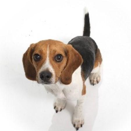 Toy beagles