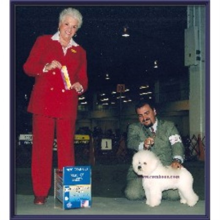 Cambea S Puppies Bichon Frise Breeder In Clearwater Florida