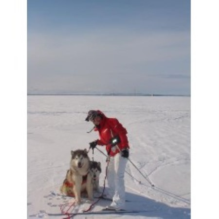 Pale Moon Kennels Alaskan Malamute Breeder In Howell Michigan