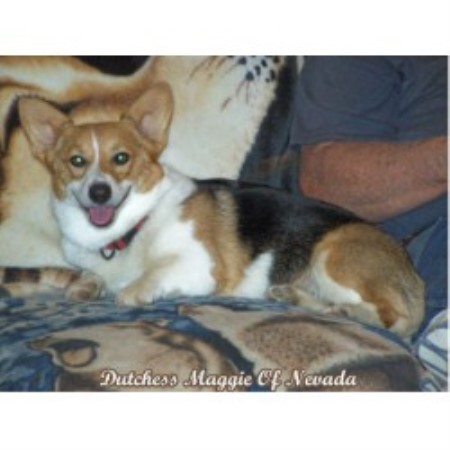 Pembroke Welsh Corgi breeder Fallon 16325