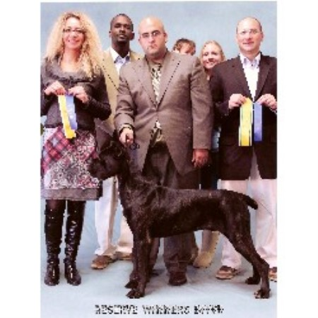 Cane Corso breeder Columbia City 16364