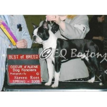 Eq Bostons Boston Terrier Breeder In Newman Lake Washington