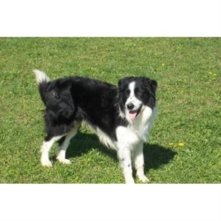 Dog Breeders In Shelburne Ontario