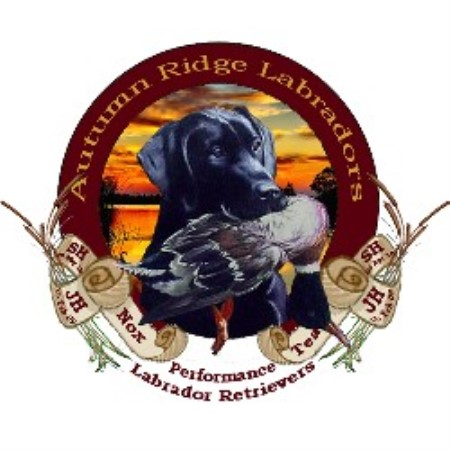 Labrador Retriever breeder Alanson 16980