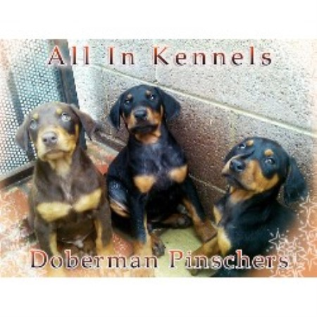 All In Kennels