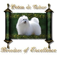 Royal Coton De Tulear Breeders Of Excellence