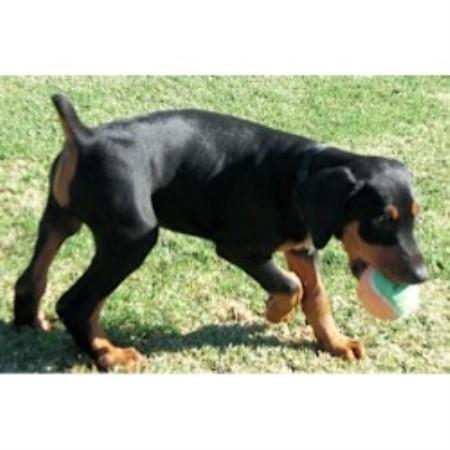 San Tan Valley Dog Rescue