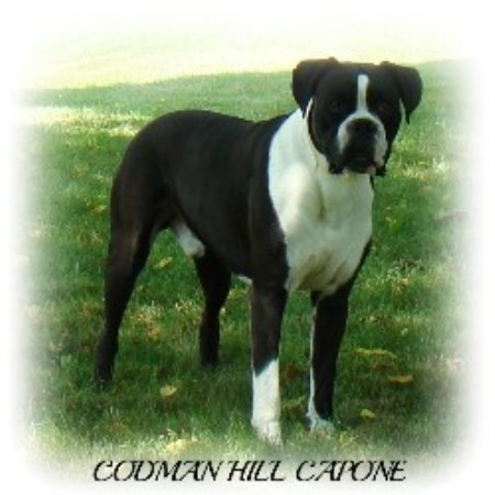 Boxer Breeders in Maine