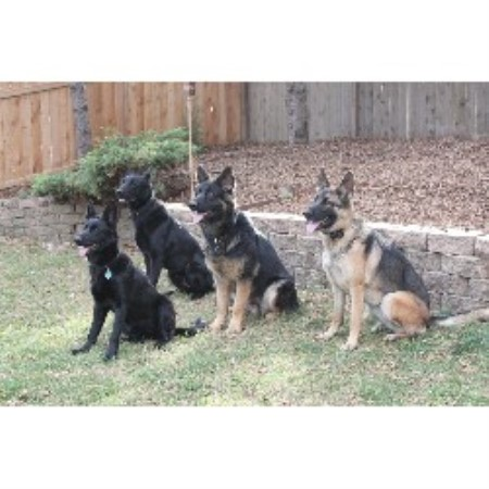 German Shepherd Dog Breeder in Minneapolis, Minnesota