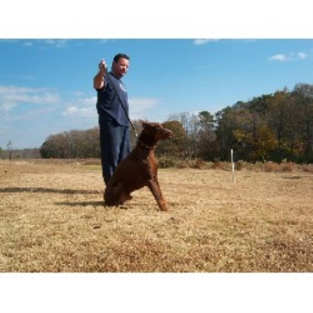 Vfarms Doberman Pinscher Breeder In Cullman Alabama