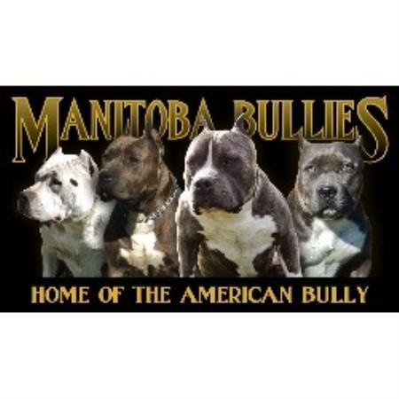 Manitoba Bullies American Pit Bull Terrier Breeder In
