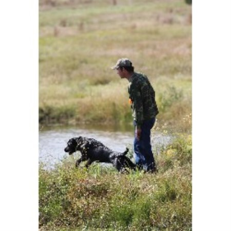 Labrador Retriever breeder Hutto 17545