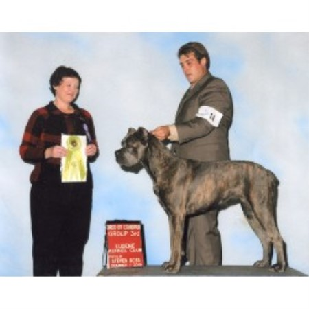 Cane Corso breeder Willow Creek 17632