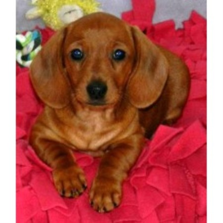 Small Dog Breeders In Connecticut