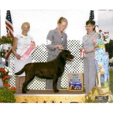 Labrador Retriever breeder in Jackson