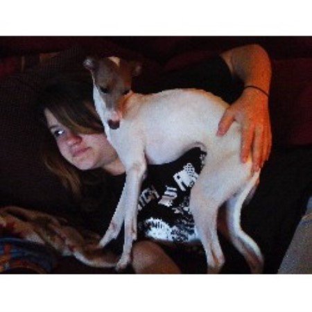 Jennifer Italian Greyhound Breeder In Babson Park Florida