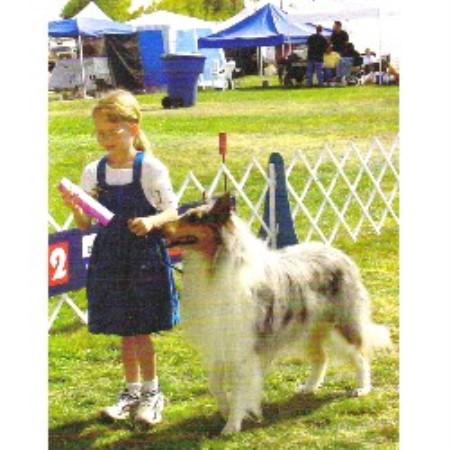 Collie breedering kennel in Los Lunas