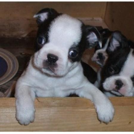 Dog kennel boston / Thursday night dinner deals