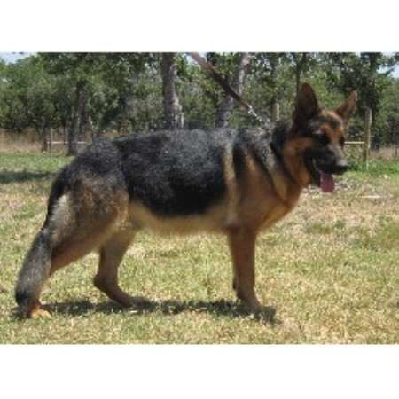 how to become a dog breeder in texas