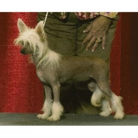 Chinese Crested breeder in Pennsylvania