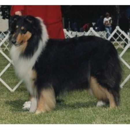 Collie breeder Ferndale 18350