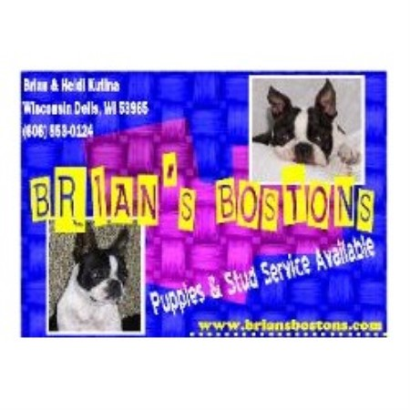 Boston Terrier breeder Wisconsin Dells 18439