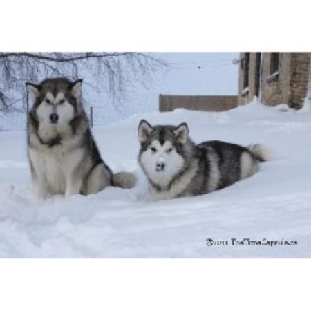 Dog Breeder London Ontario