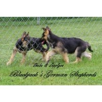 Blackjack's German Shepherds