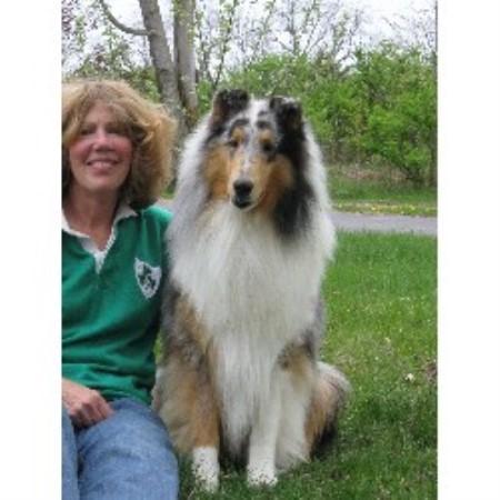 Rivendell Collie Breeder In Mazomanie Wisconsin