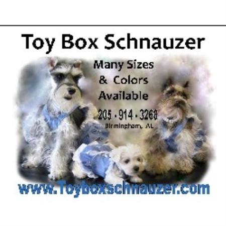 Miniature schnauzer breeders alabama