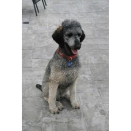Dog Kennel For Sale Salt Lake City