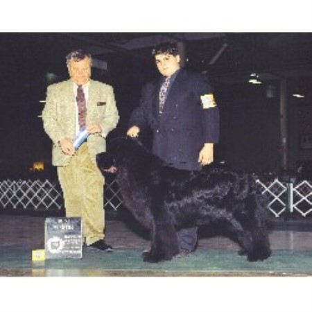 Newfoundland Dog breeder in Grafton, Ohio