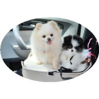 Candicoloredpoms.Com