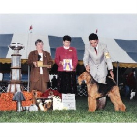 Reydale Terrydale Airedales Airedale Terrier Breeder In Apex North Carolina