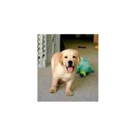 Georgetown Colorado Dog Rescue