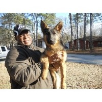 Laquana - German Shepherd Dog Breeder