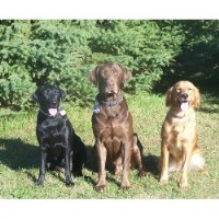 Highland Kennel Retrievers