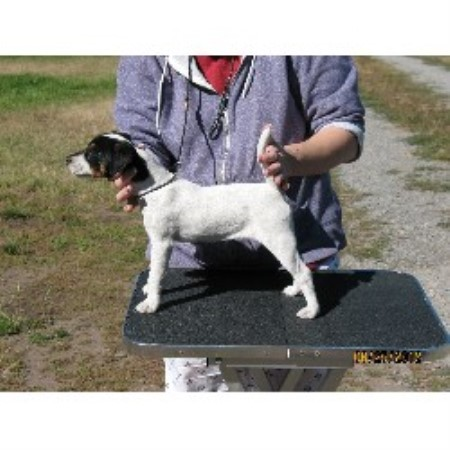 Four Winds Parson Terriers, Parson Russell Terrier Breeder ...