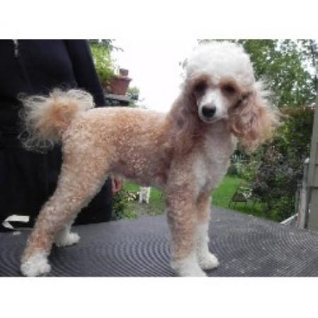 North Carolina Dog Adoption Ophelia