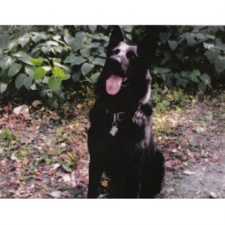 Naples Maine Dog Grooming