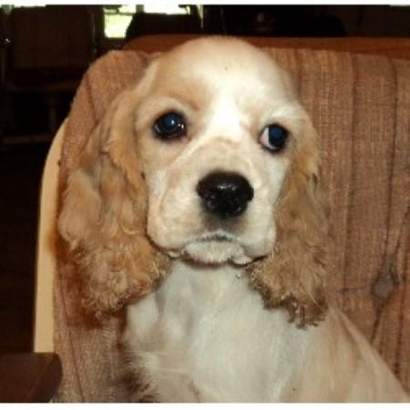Maltese Dog Breeders In Alberta Maltese Puppies For Sale | Dog Breeds ...