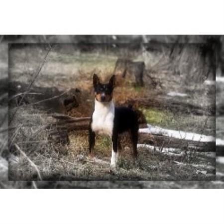 Ridgeback Dog Breeders Ontario