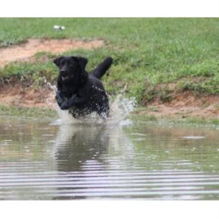 Small Dog Breeders North Carolina