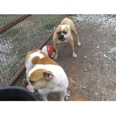Dog Kennels Dothan Al