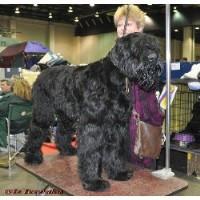 Black russian terrier breeders tennessee
