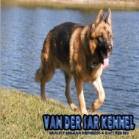 Van Der Sar Kennel