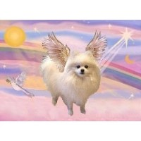 Angel Wings Pomeranians