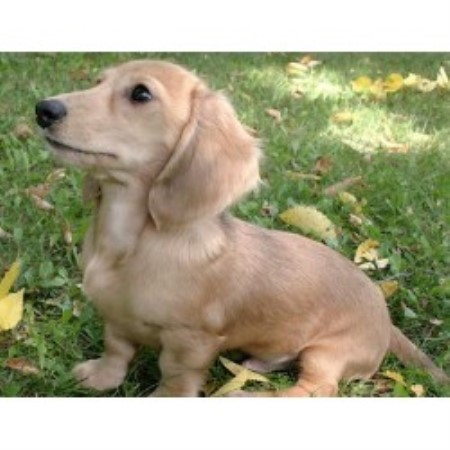 Dog Rescue Northeast Wisconsin