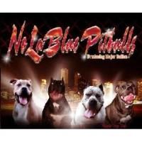 American Pit Bull Terrier Breeders in Louisiana