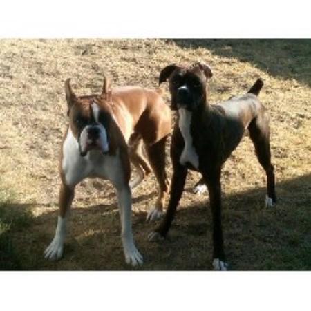 Smokey And The Bandit Dog Breed